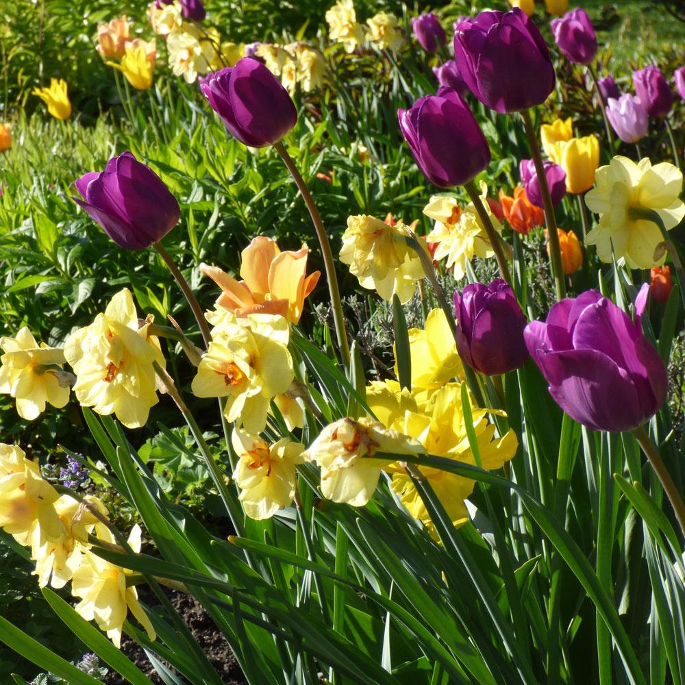10 Ideen für Frühlingsbeete 3