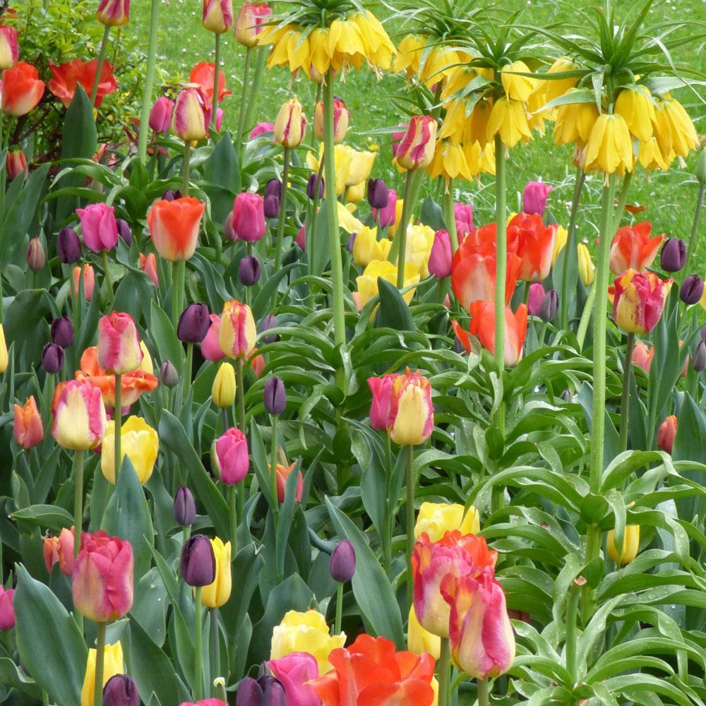 10 Ideen für Frühlingsbeete 1