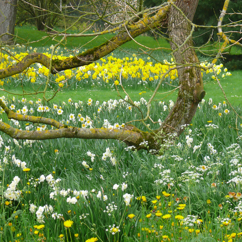 10 Ideen für Frühlingsbeete 2