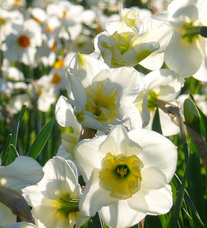 Sehnsucht nach dem Frühling 4