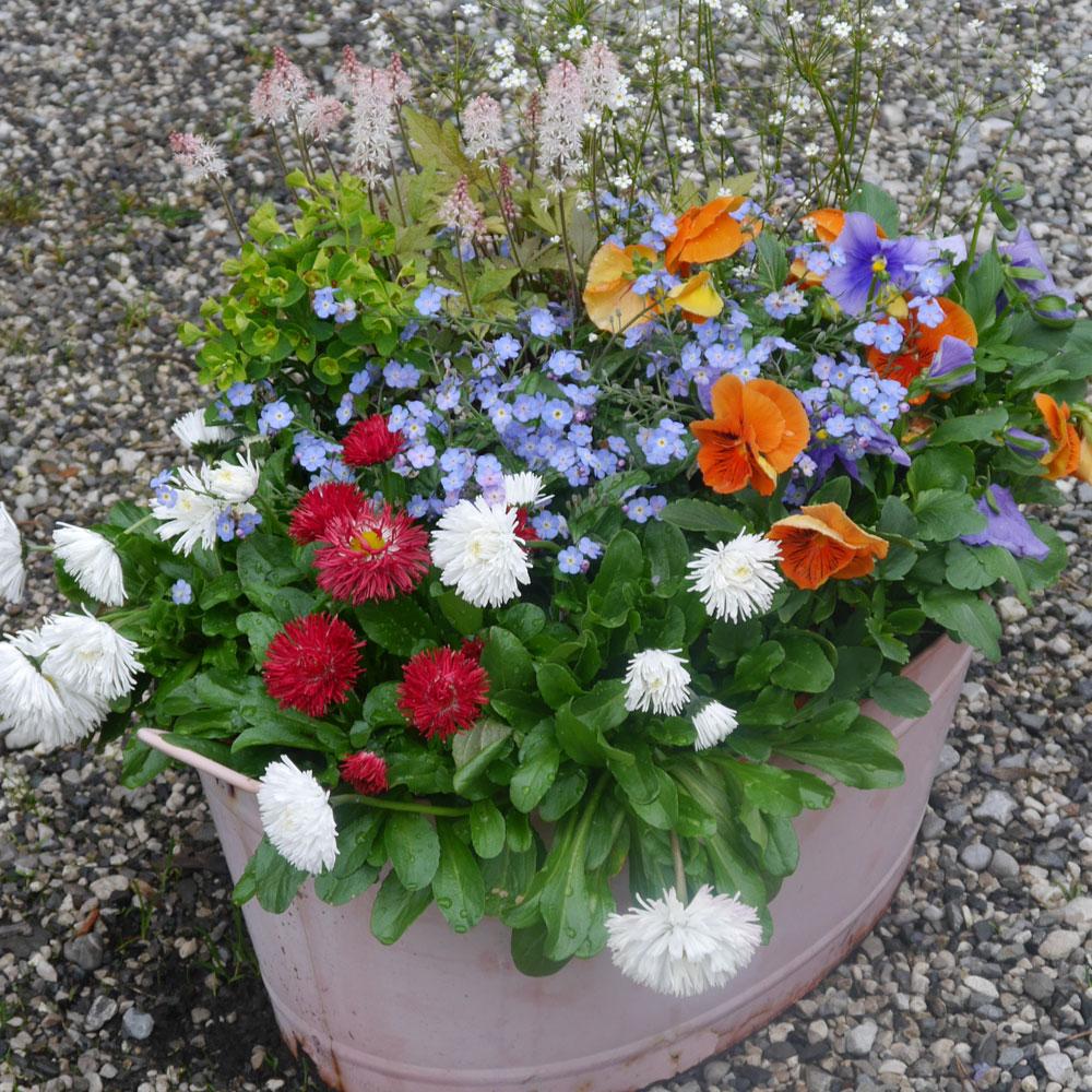 Pflanzkübel im Frühling