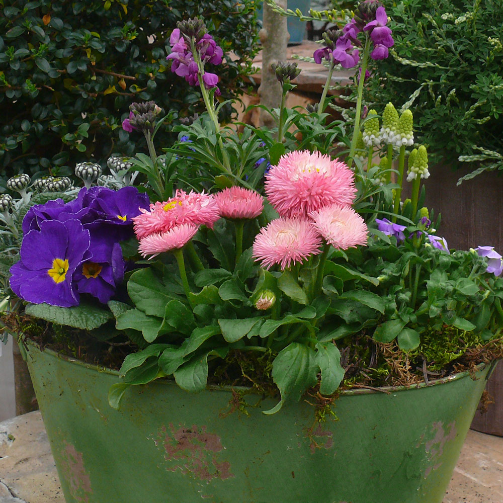 Schöne Pflanzkübel im Frühling 13