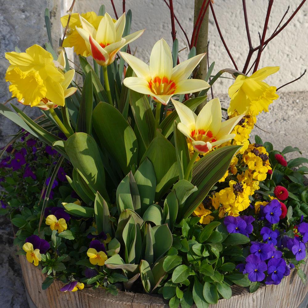 Schöne Pflanzkübel im Frühling 2