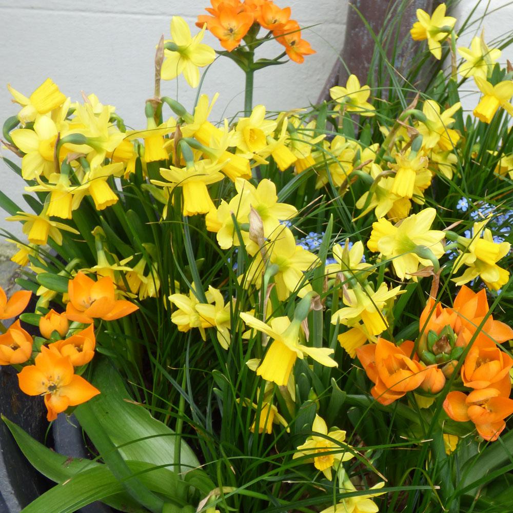 Sehnsucht nach dem Frühling 3