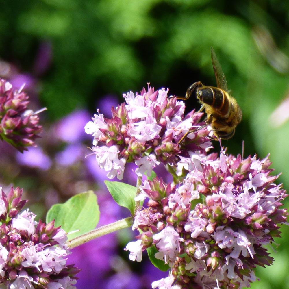 Wie Sie Ihren Garten bienenfreundlich gestalten 1