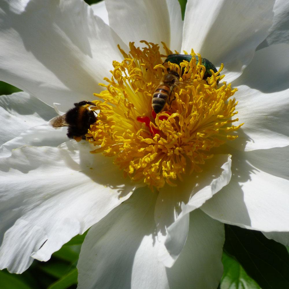 Wie Sie Ihren Garten bienenfreundlich gestalten 2