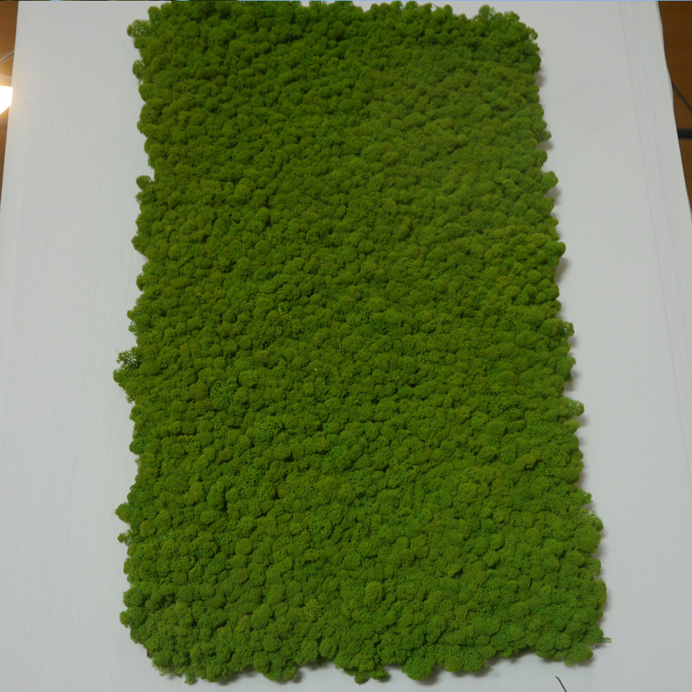 Pflanzenbild