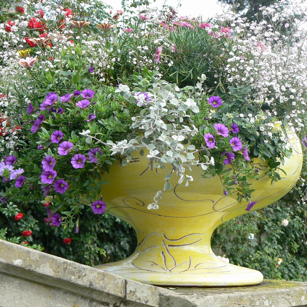 Blütenträume in Balkonkästen und Kübeln 20