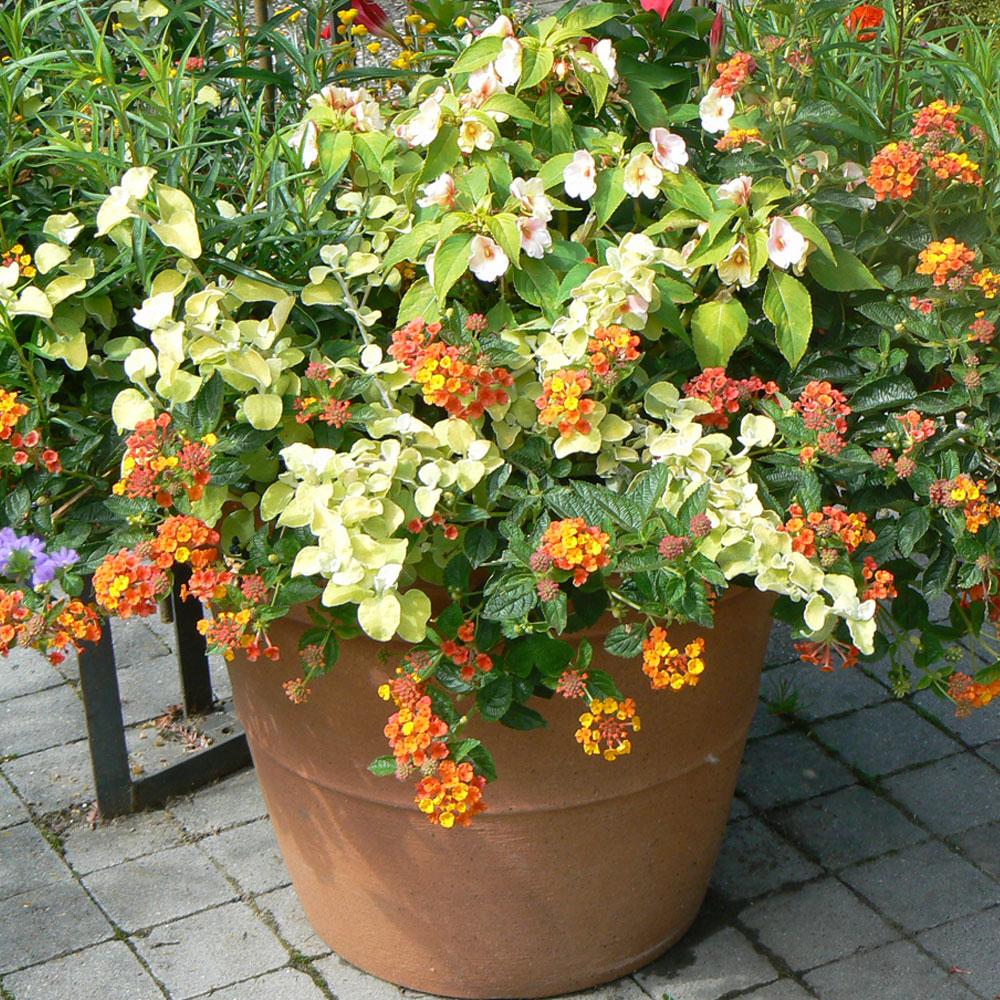 Blütenträume in Balkonkästen und Kübeln 7
