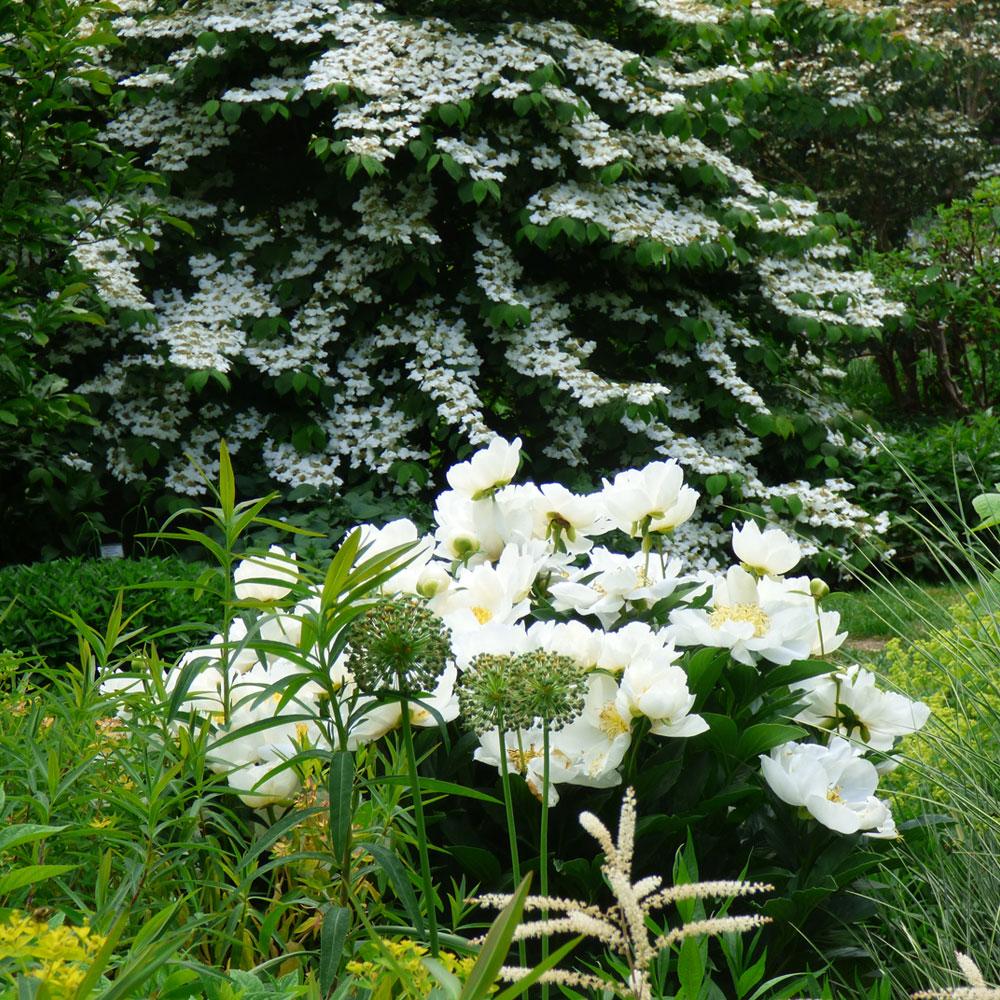 Ganz in Weiß - So wirken Beete und Gärten besonders edel 7