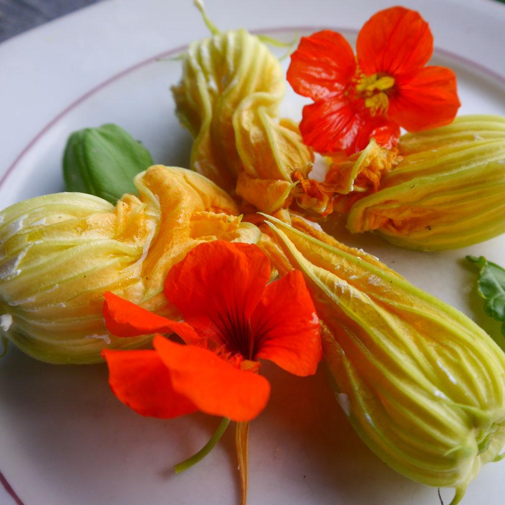 Zucchiniblüten: diese Blüten sind nicht nur essbar, sondern wirklich lecker 1