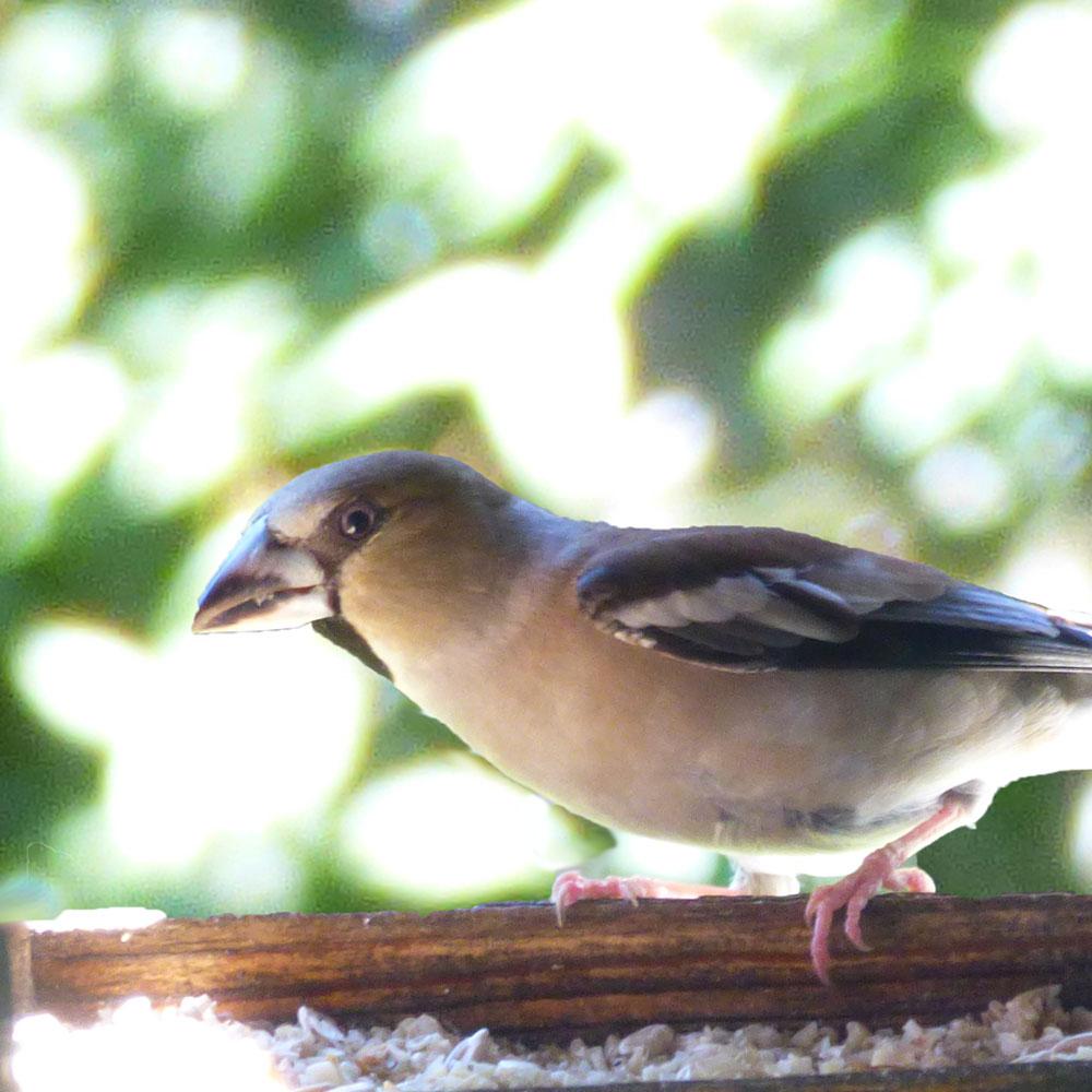 Vögel füttern im Sommer