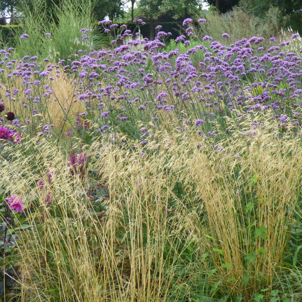 Wilde Gärten - naturnah und pflegeleicht 18