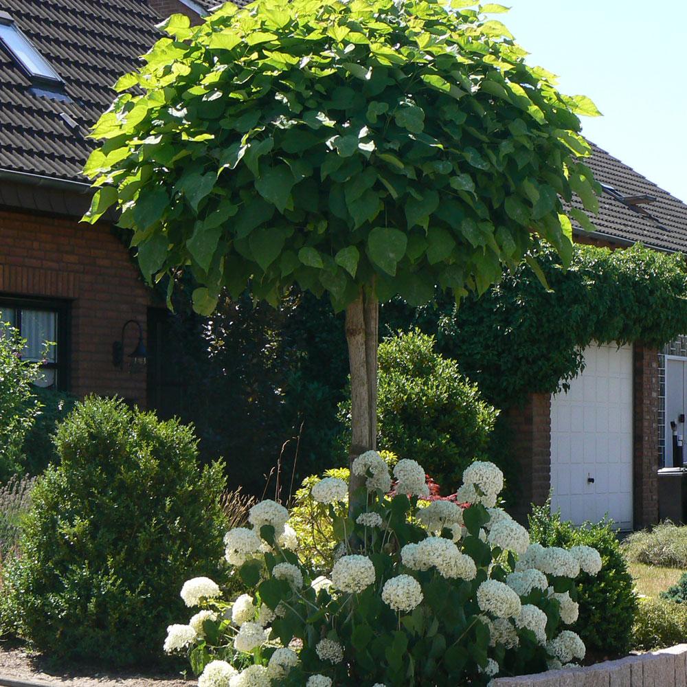 Hausbaum