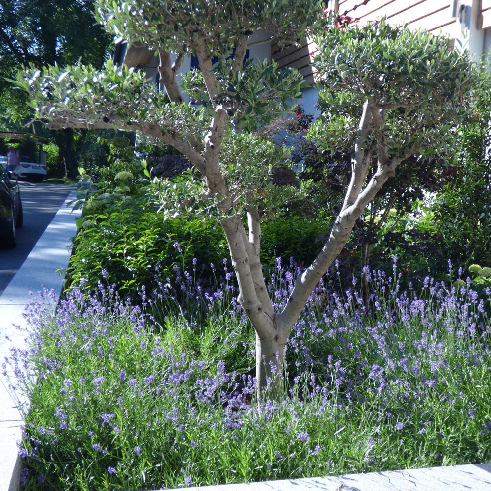 Vorgarten gestalten