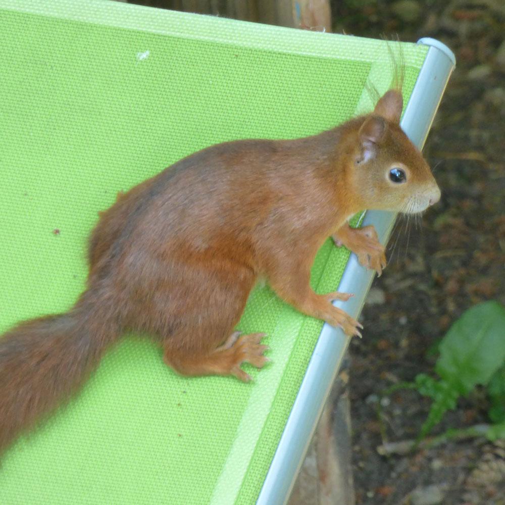 Eichhörnchen anlocken: Die 6 besten Tipps 2