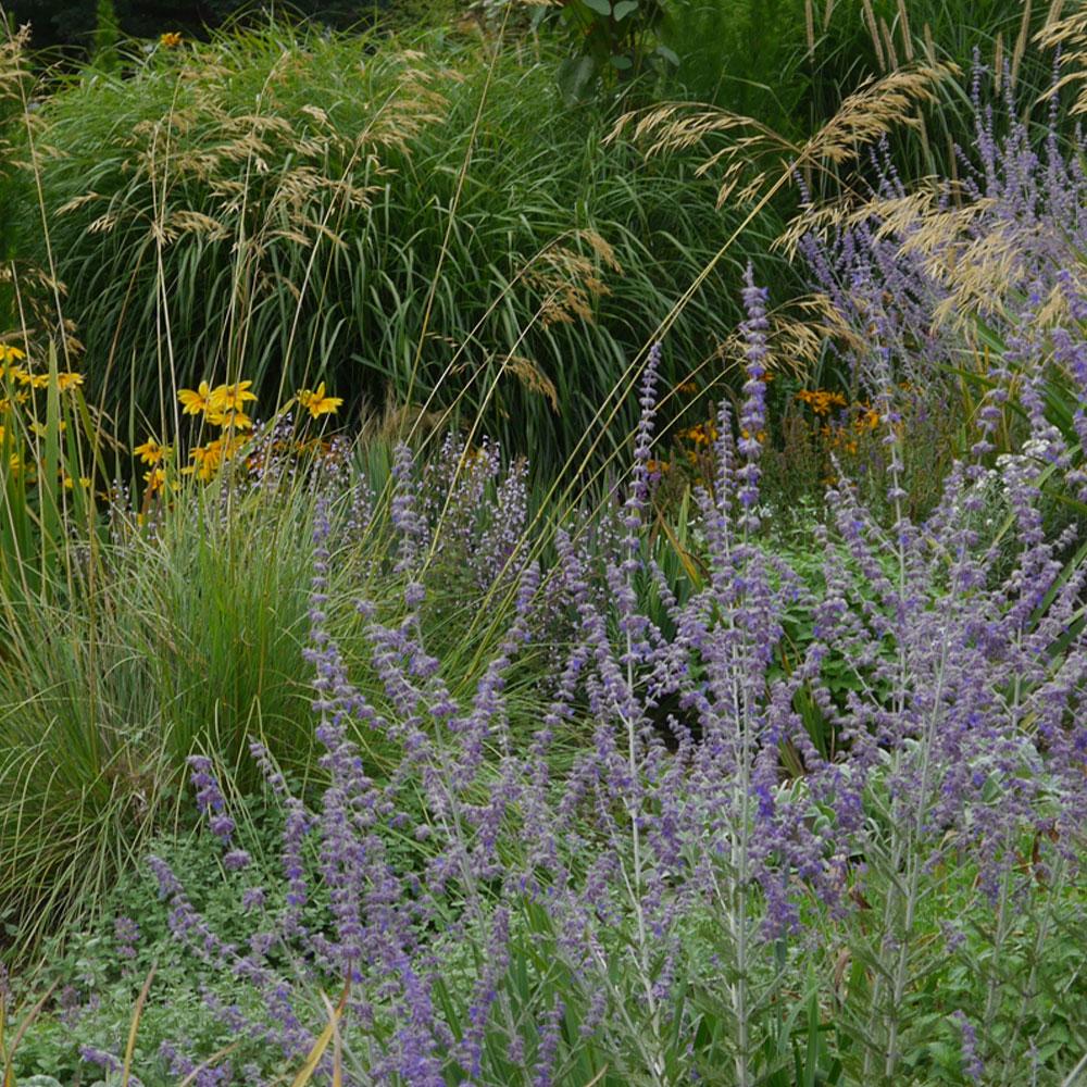 trockenheitsresistente Pflanzen