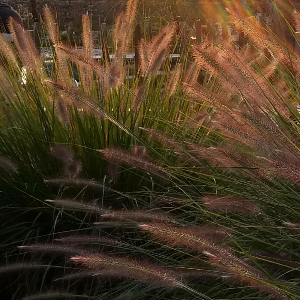 Auch im Herbst kann der Garten noch reizvoll sein 1