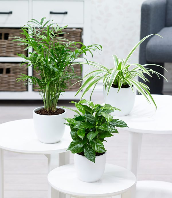 Zimmerpflanzen-Mix 'Tropic' 1