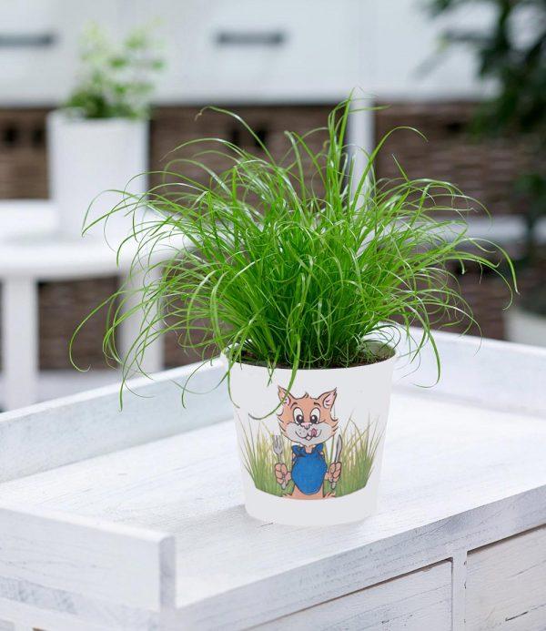 Katzengras 1