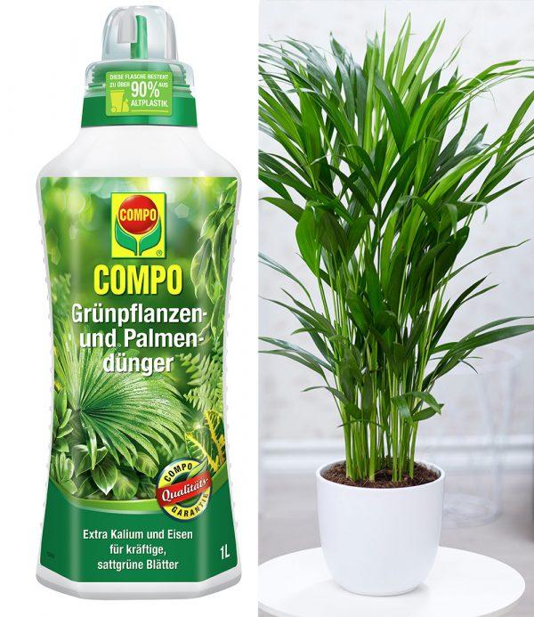 COMPO® Palmendünger & Areca Palme ca. 50 cm hoch 1
