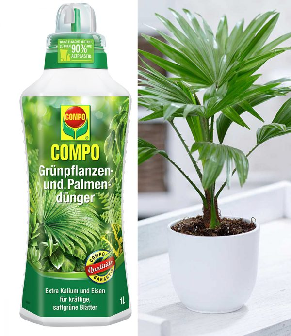 COMPO® Palmendünger & Palme 'Livistona Rotundifolia' 1