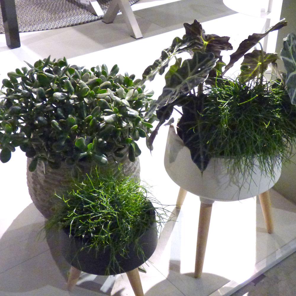 Zimmerpflanzen: Wie pflege ich meine Pflanzen richtig? 1