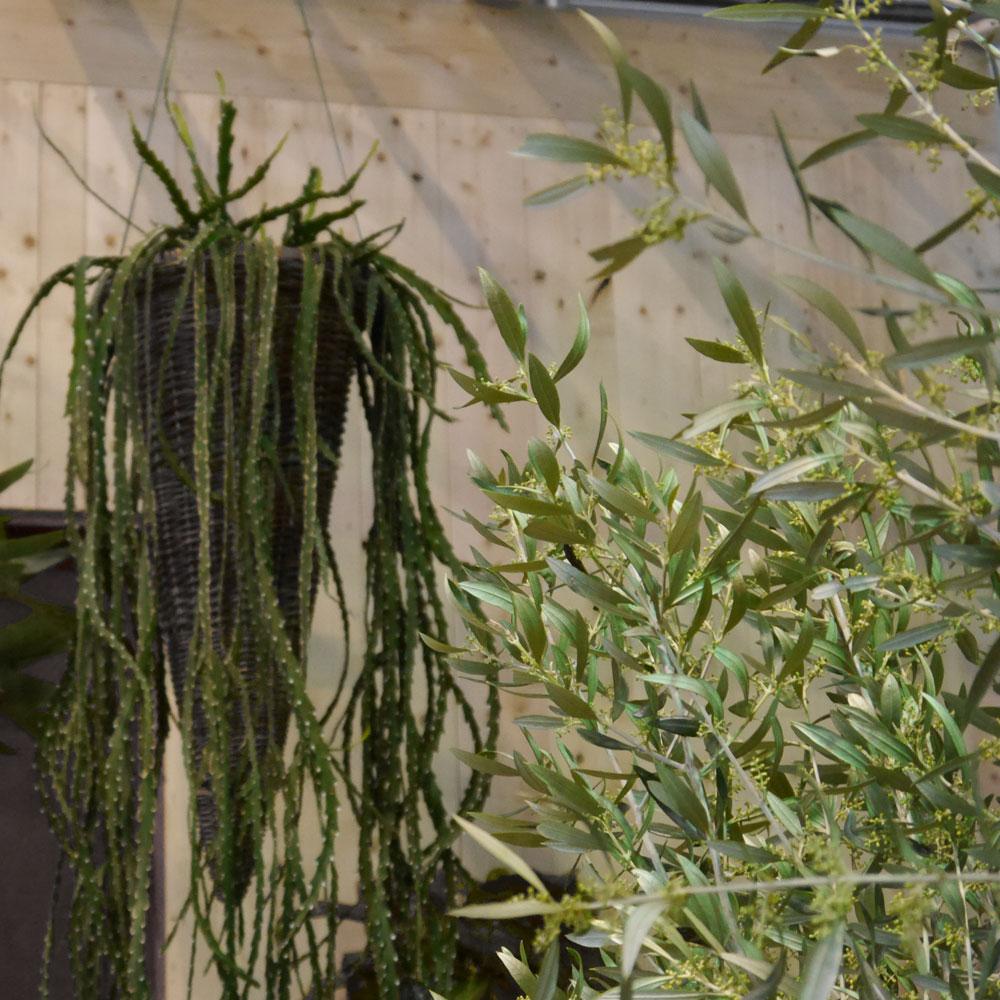Zimmerpflanzen: Wie pflege ich meine Pflanzen richtig?