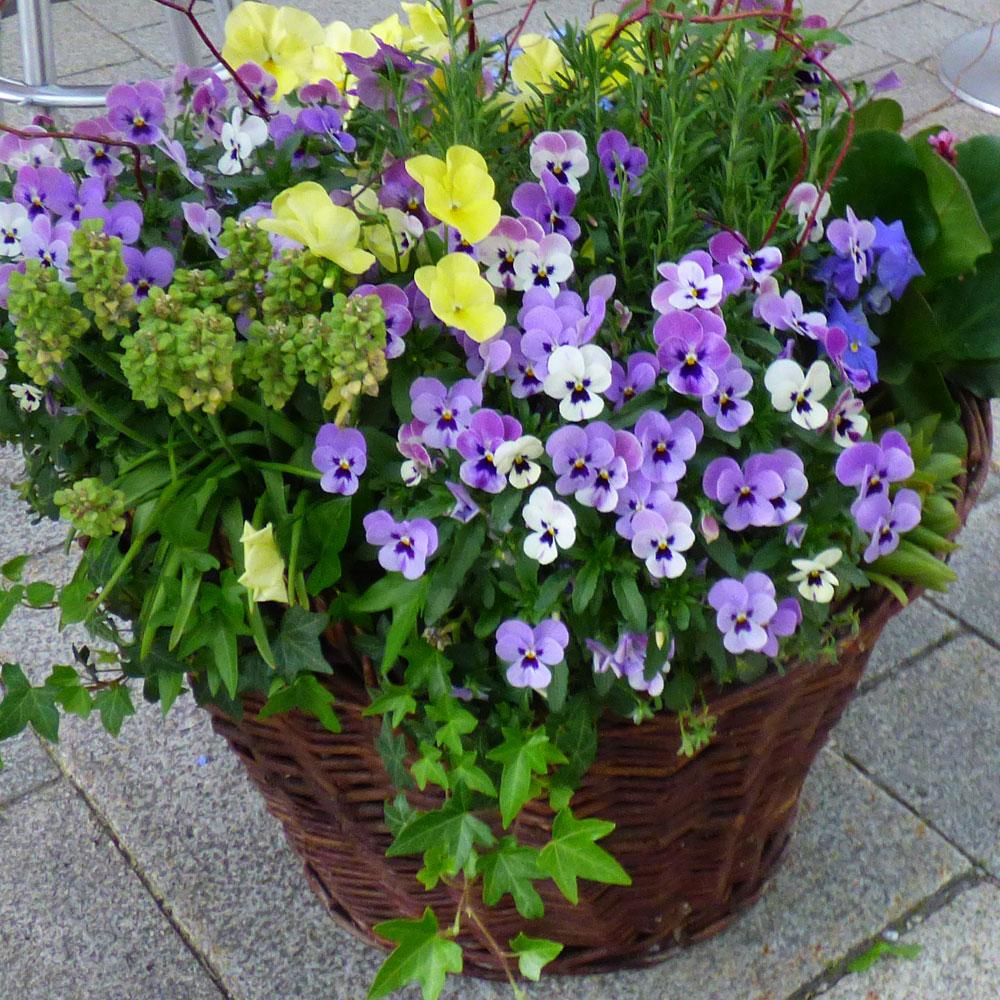 12 Ideen für Balkonpflanzen im Frühling 3