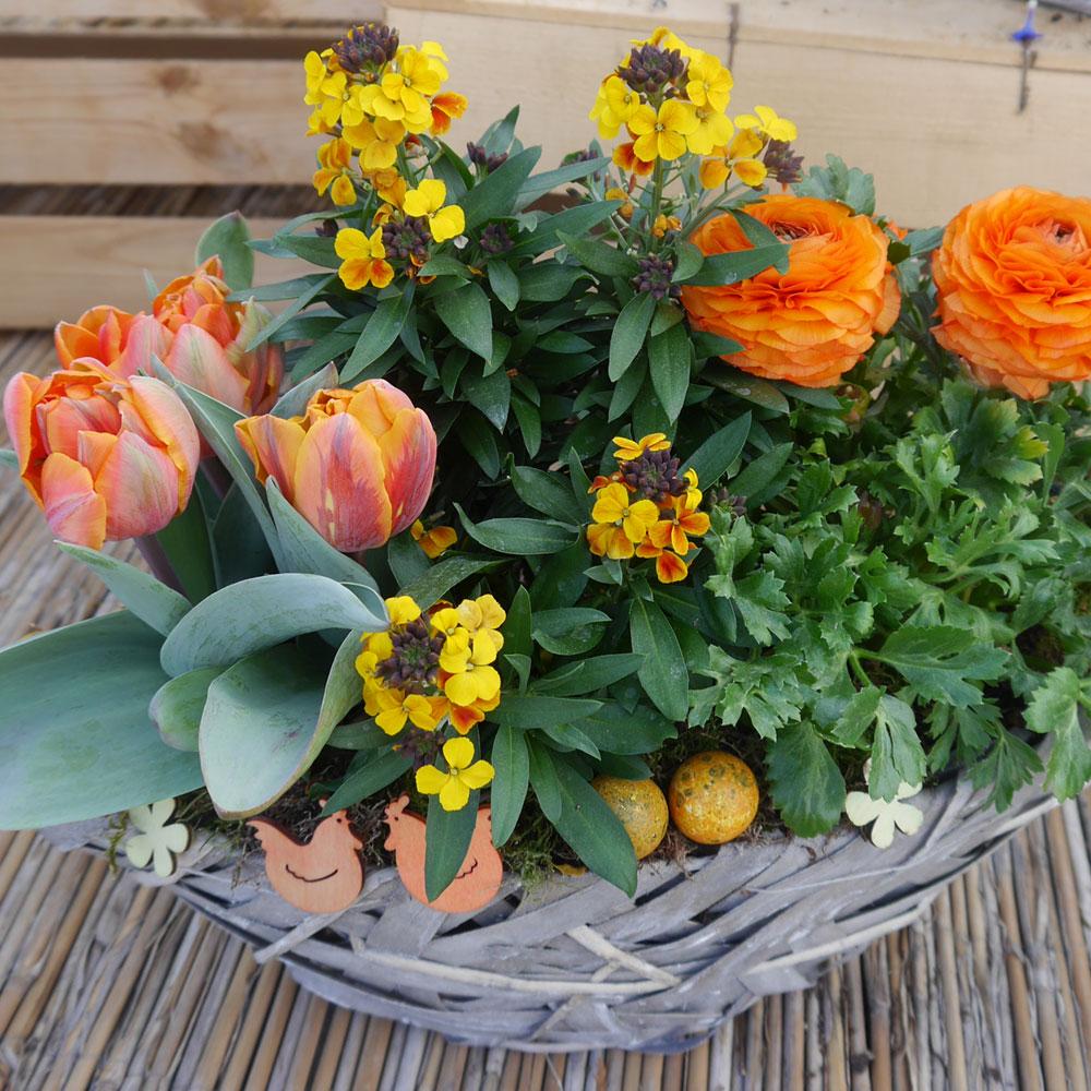 balkonpflanzen frühling