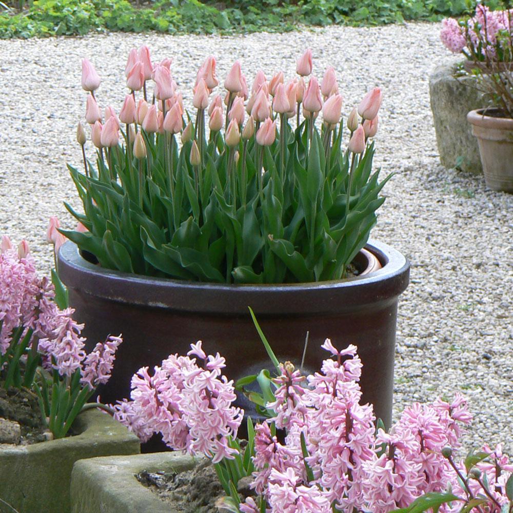 12 Ideen für Balkonpflanzen im Frühling 8