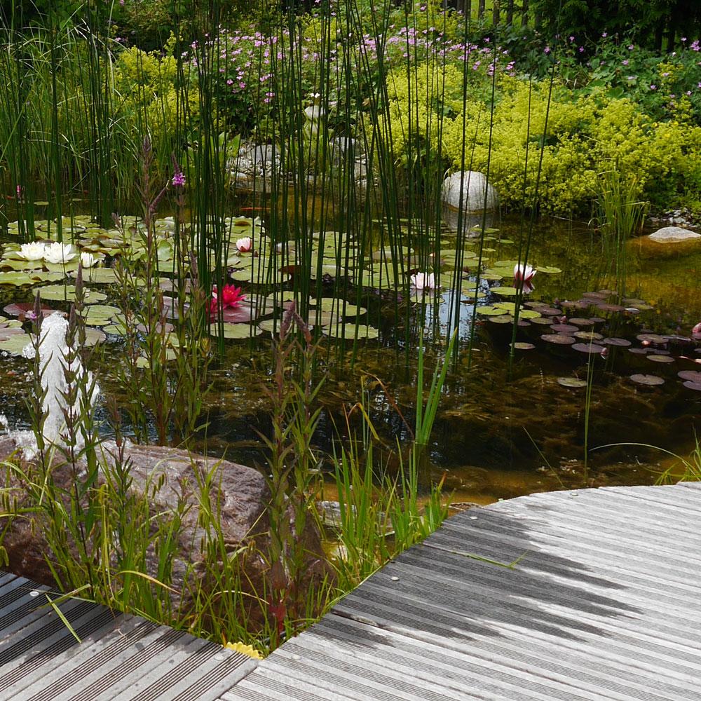 Naturteiche: Faszinierendes Leben am + im Wasser 7