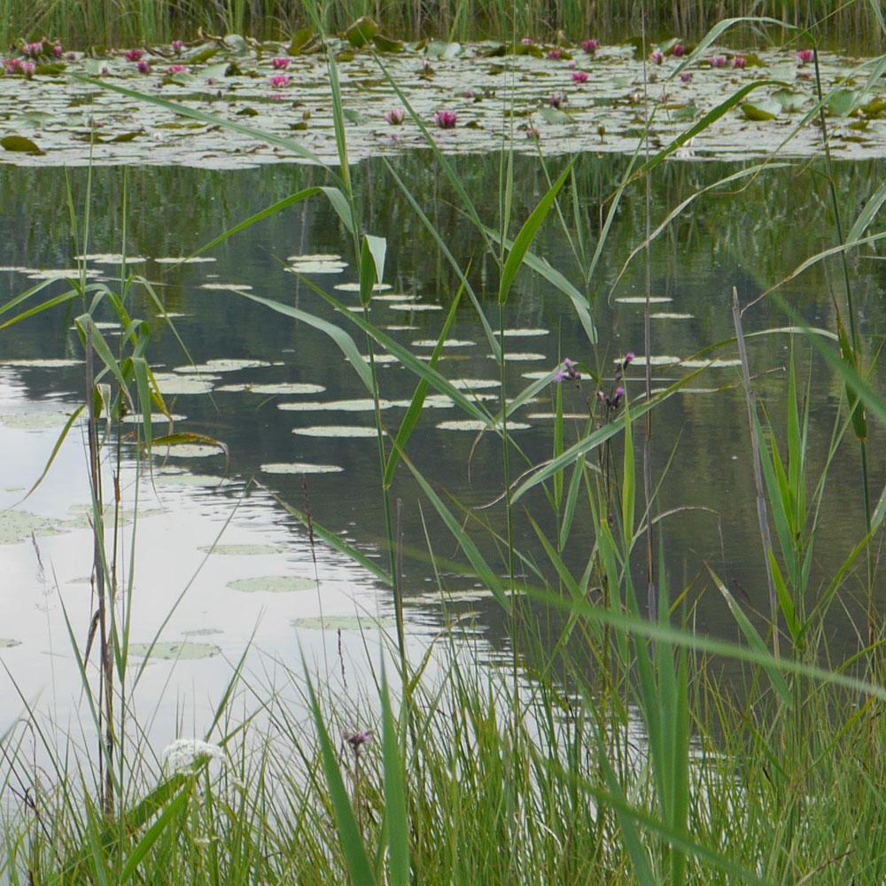 Naturteiche: Faszinierendes Leben am + im Wasser 8