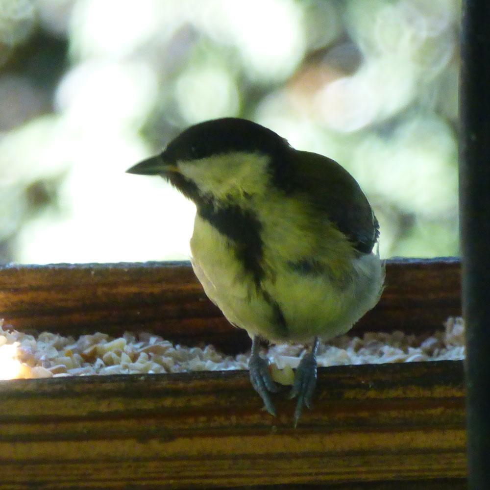 Wie Sie jetzt Vögel unterstützen können: Nistkästen aufhängen 16