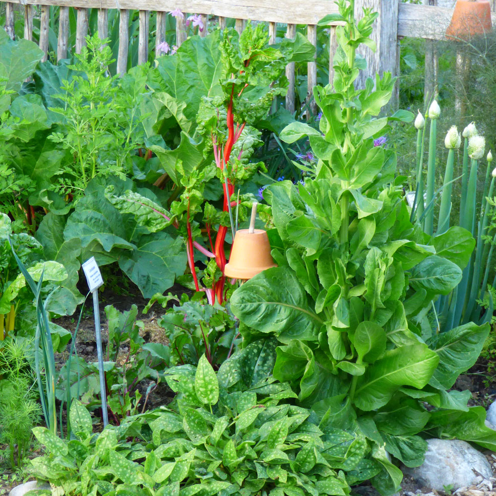 Gemüse selber anbauen - ganz einfach 1