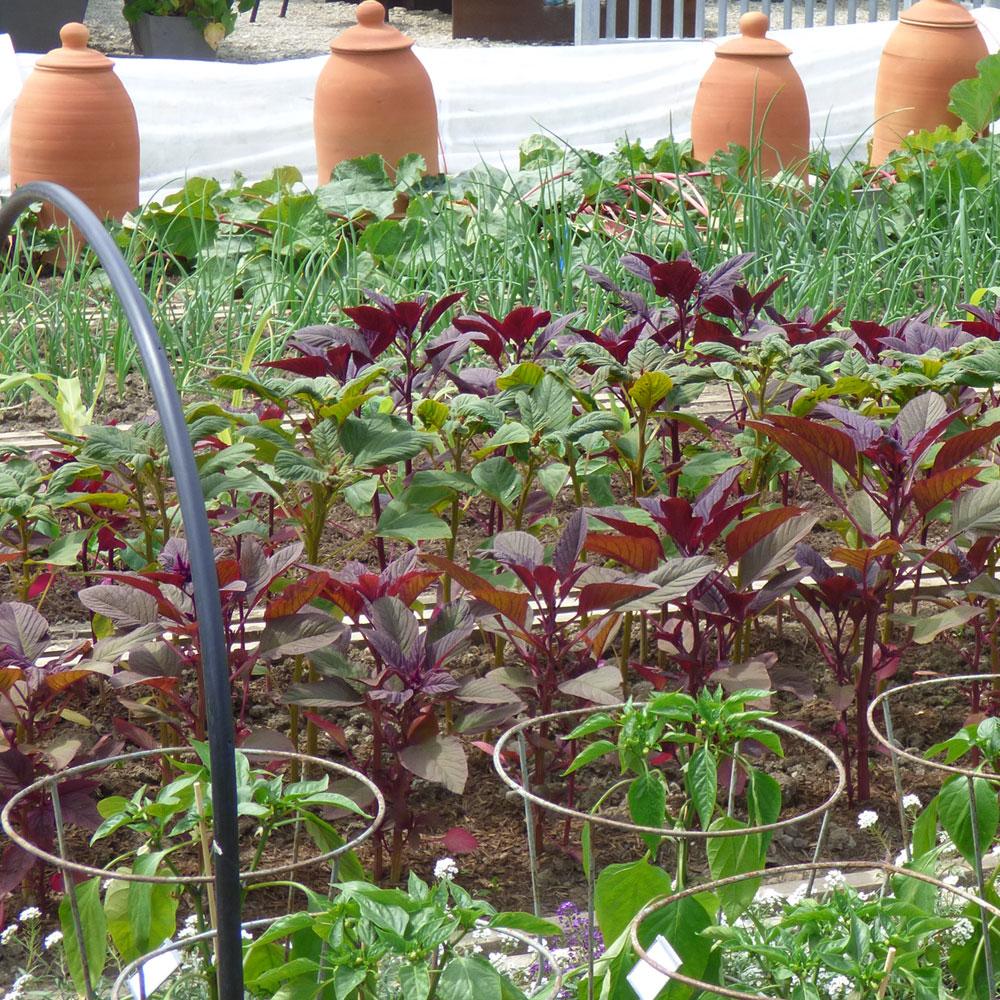 Gemüse selber anbauen - ganz einfach 3