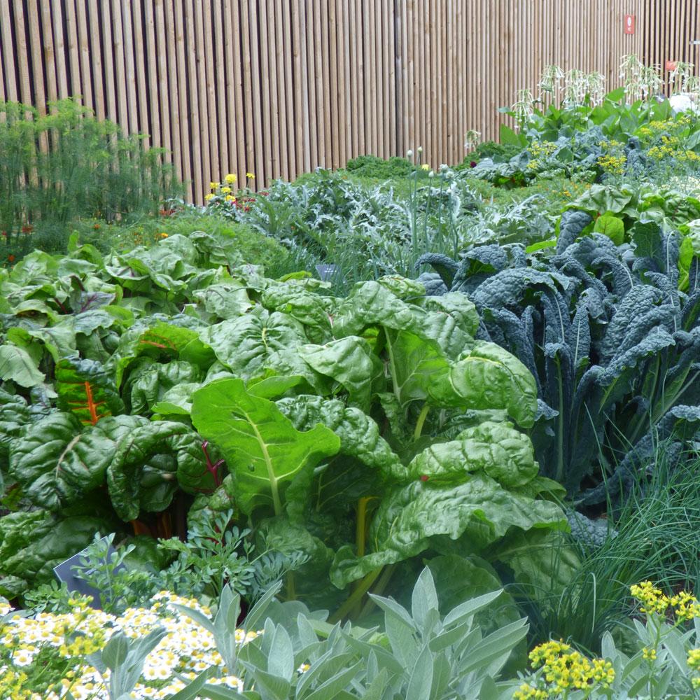 Gemüse selber anbauen