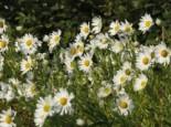 Wilde Gärten - naturnah und pflegeleicht 6