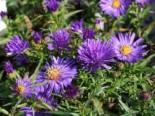 Gartengestaltung modern und pflegeleicht und naturnah 2
