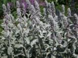 Wilde Gärten - naturnah und pflegeleicht 8