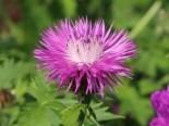 Gartengestaltung modern und pflegeleicht und naturnah 3