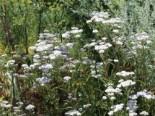Wilde Gärten - naturnah und pflegeleicht 17