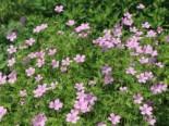 Gartengestaltung modern und pflegeleicht und naturnah 24