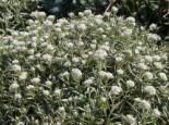 Kübelpflanzen - der Charme des Südens 10