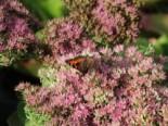 Gartengestaltung modern und pflegeleicht und naturnah 1