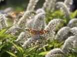 Gartengestaltung modern und pflegeleicht und naturnah 15
