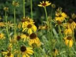 Gartengestaltung modern und pflegeleicht und naturnah 14