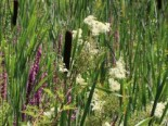 Kübelpflanzen - der Charme des Südens 5