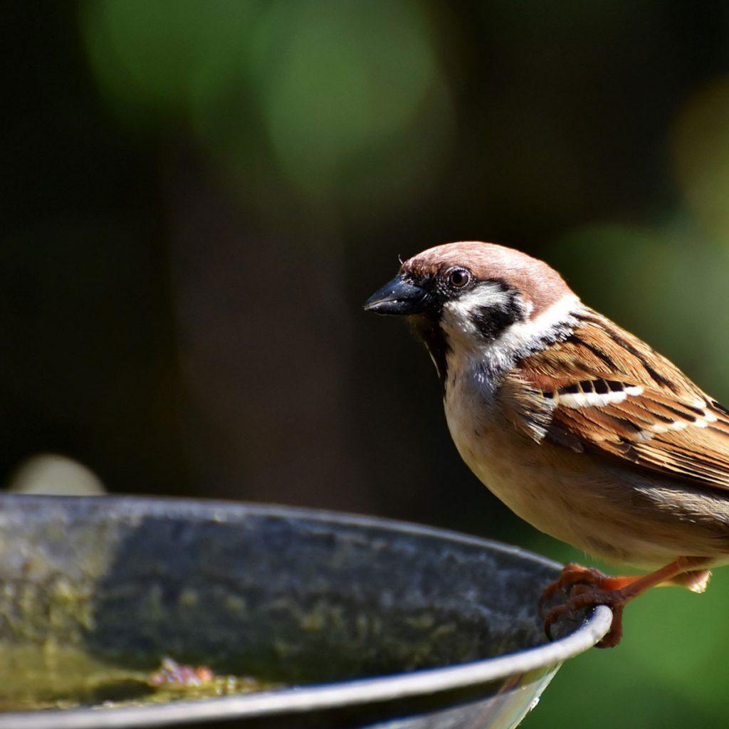 Vögel im Garten: Wie Sie mehr Vögel anlocken können 2