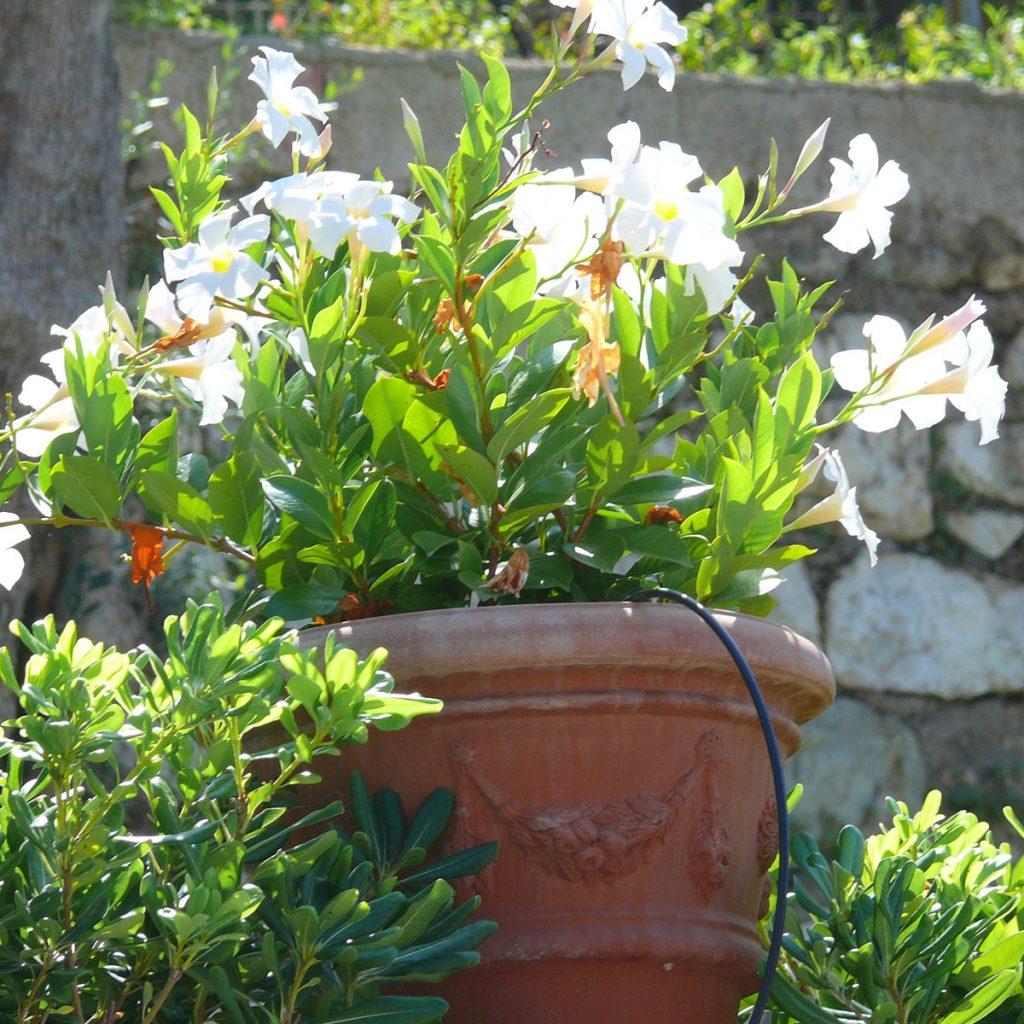 Wasser sparen im Garten 13